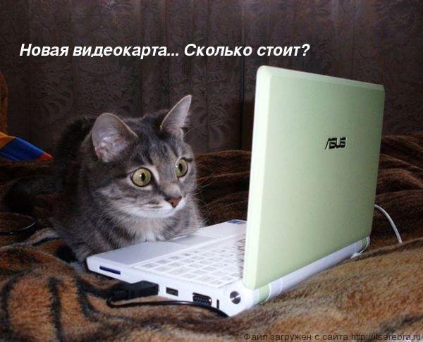 Кото-интернеты